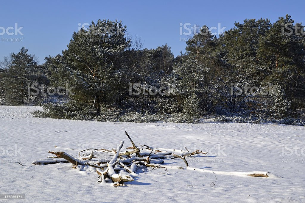 雪の Kootwijkerzand ます。 ロイヤリティフリーストックフォト