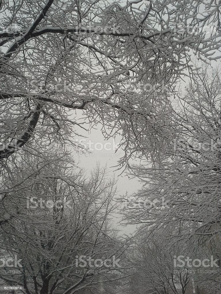 Snow on tree branches stock photo