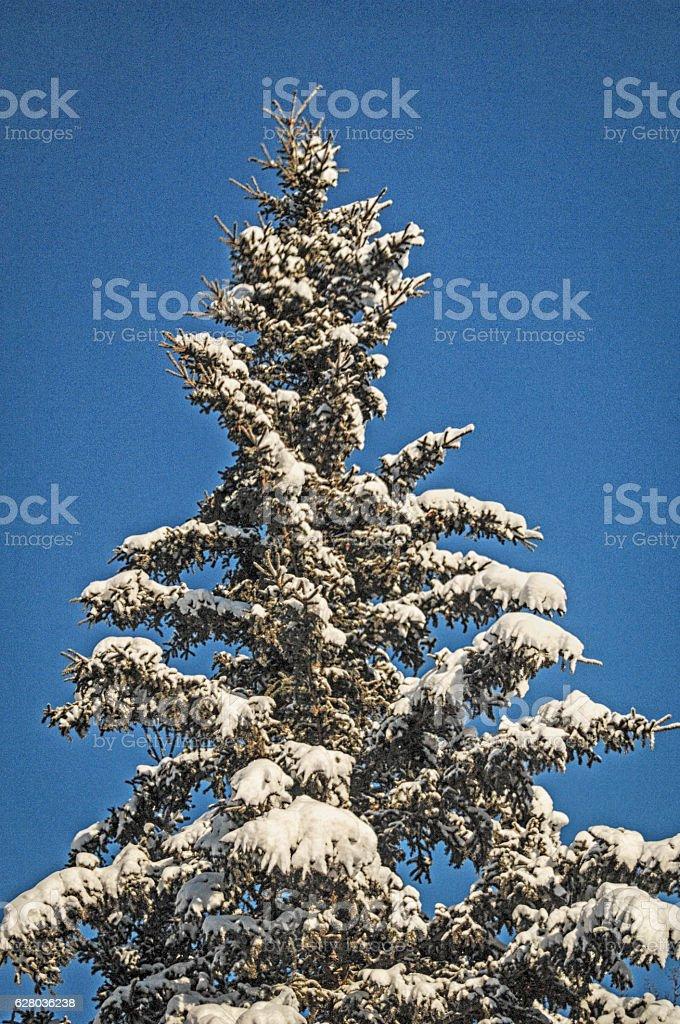 Snow on Tree stock photo