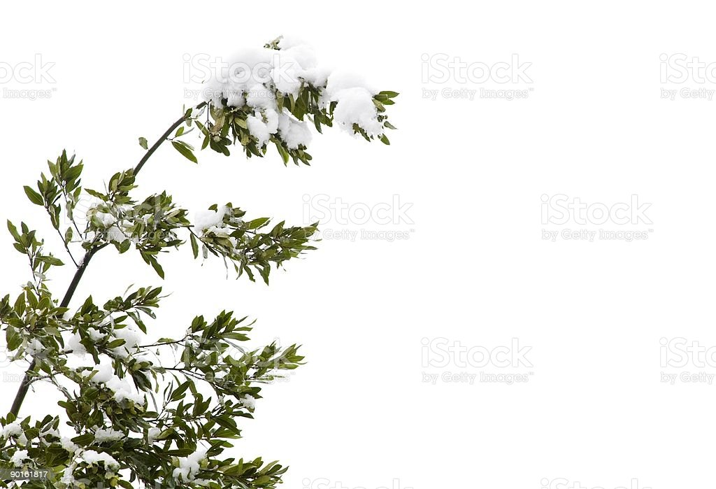 Snow on tree royalty-free stock photo