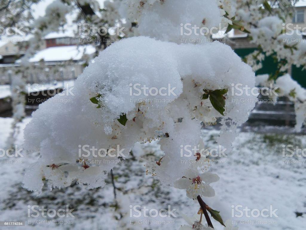 Snow on white rings stock photo