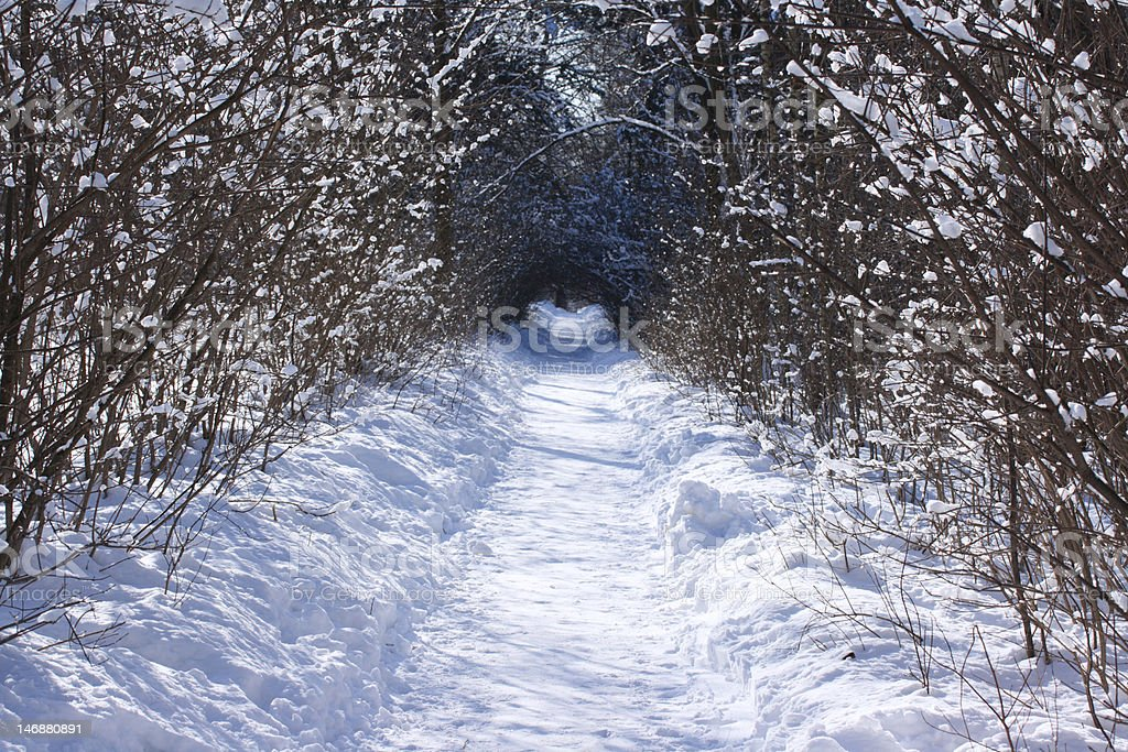 snow path in a forest royalty-free stock photo
