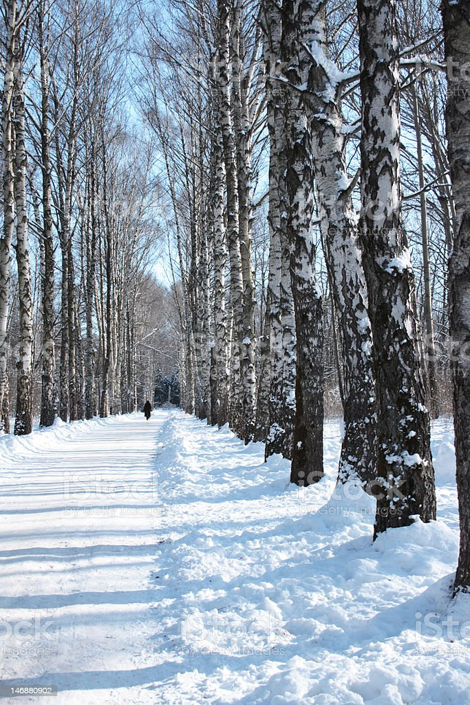 snow path in a park royalty-free stock photo