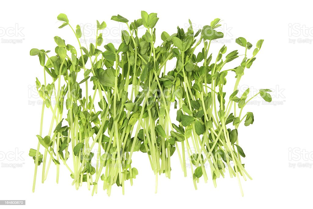 Snow Pea Sprouts royalty-free stock photo