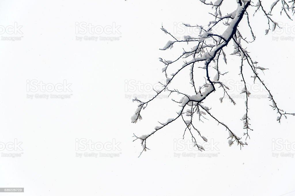 Śnieg dochodzi do spiętrzenia na oddziale. zbiór zdjęć royalty-free