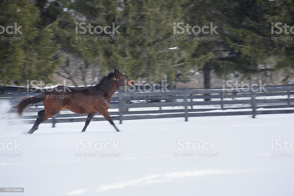 Snow play for a horse. royalty-free stock photo