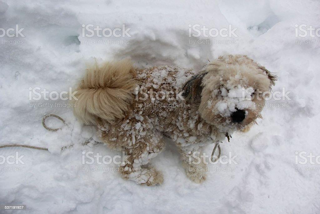 snow puppy sit stock photo