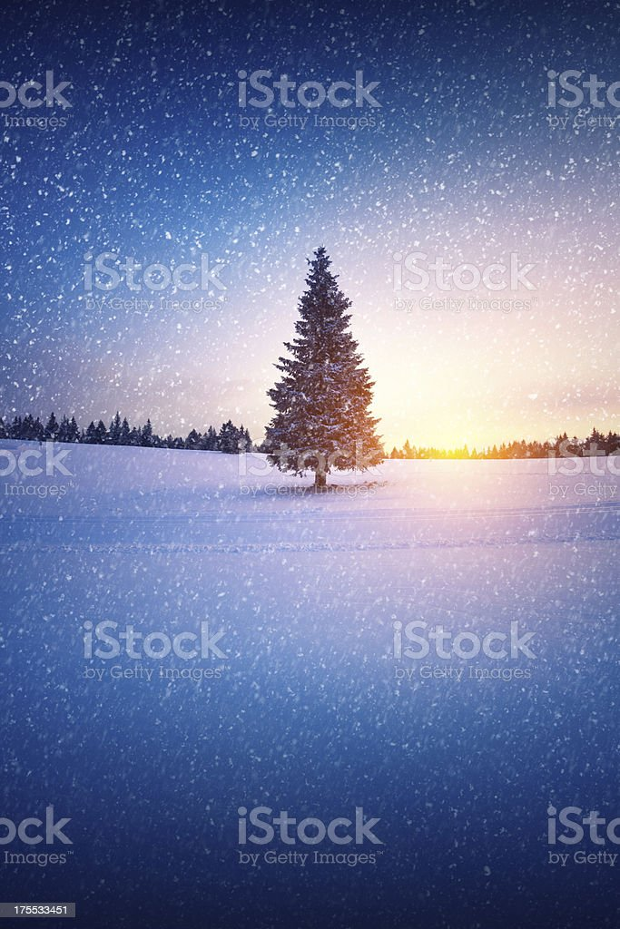 Snow Storm At Sunset royalty-free stock photo
