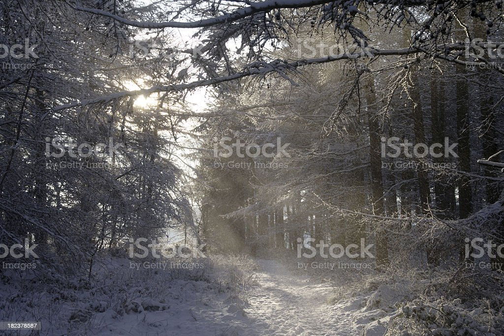 Snow Streaming Down stock photo