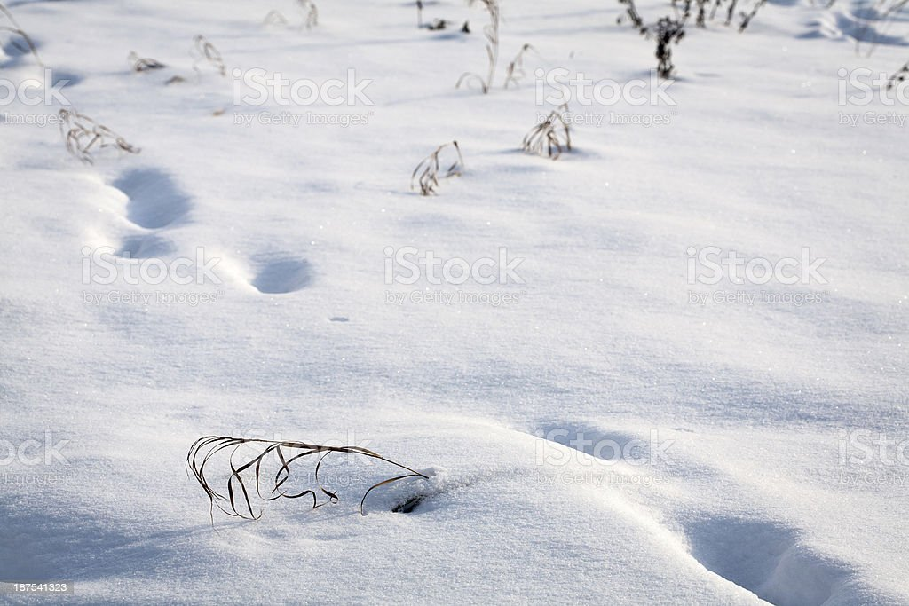Snow texture with foot prints royalty-free stock photo