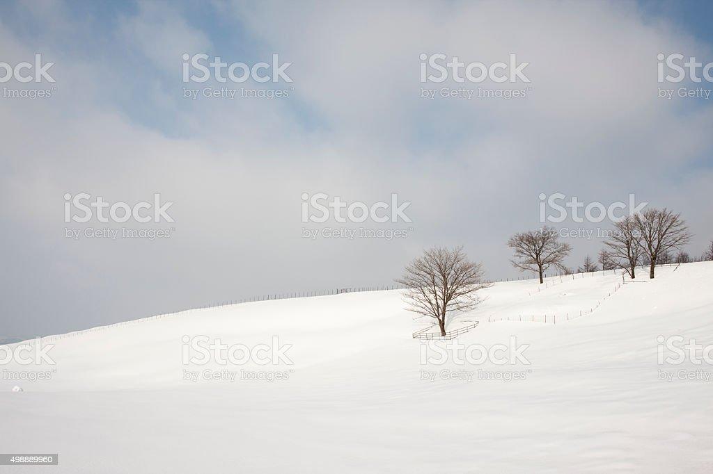 snow, tree stock photo