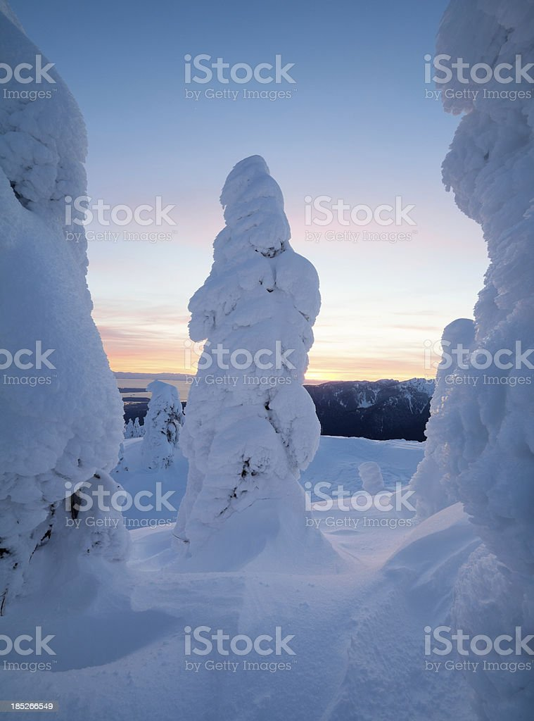 Snow Trees and Sunset stock photo