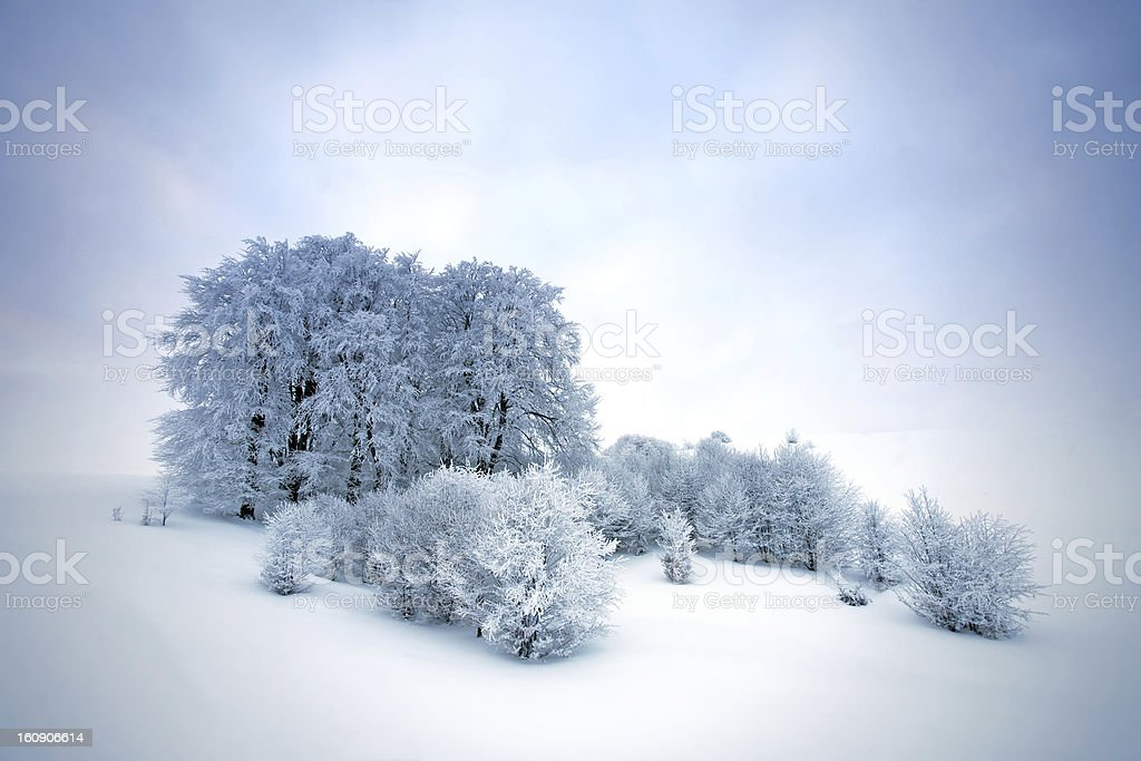 Snow trees royalty-free stock photo