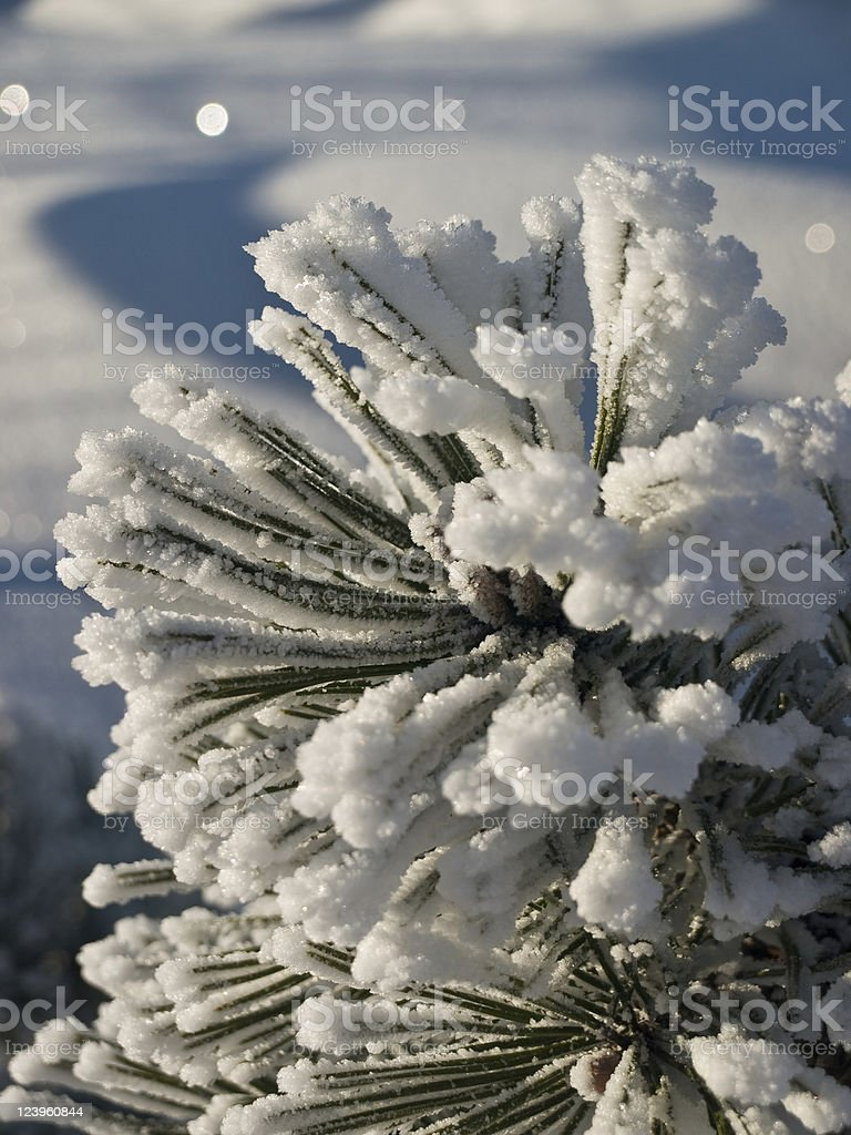 Snow twig royalty-free stock photo