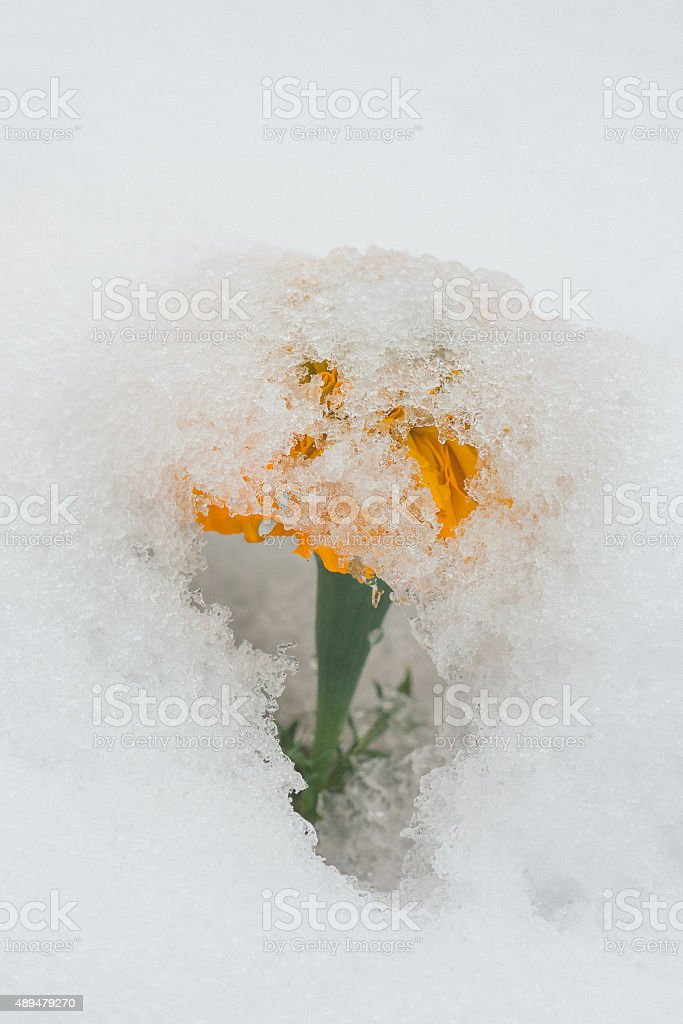 Snow Umbrella stock photo