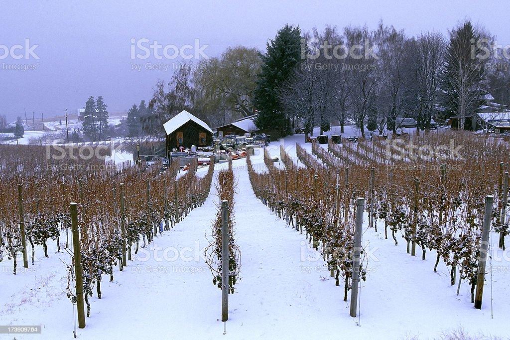 snow vineyard ice wine okanagan valley scenic stock photo