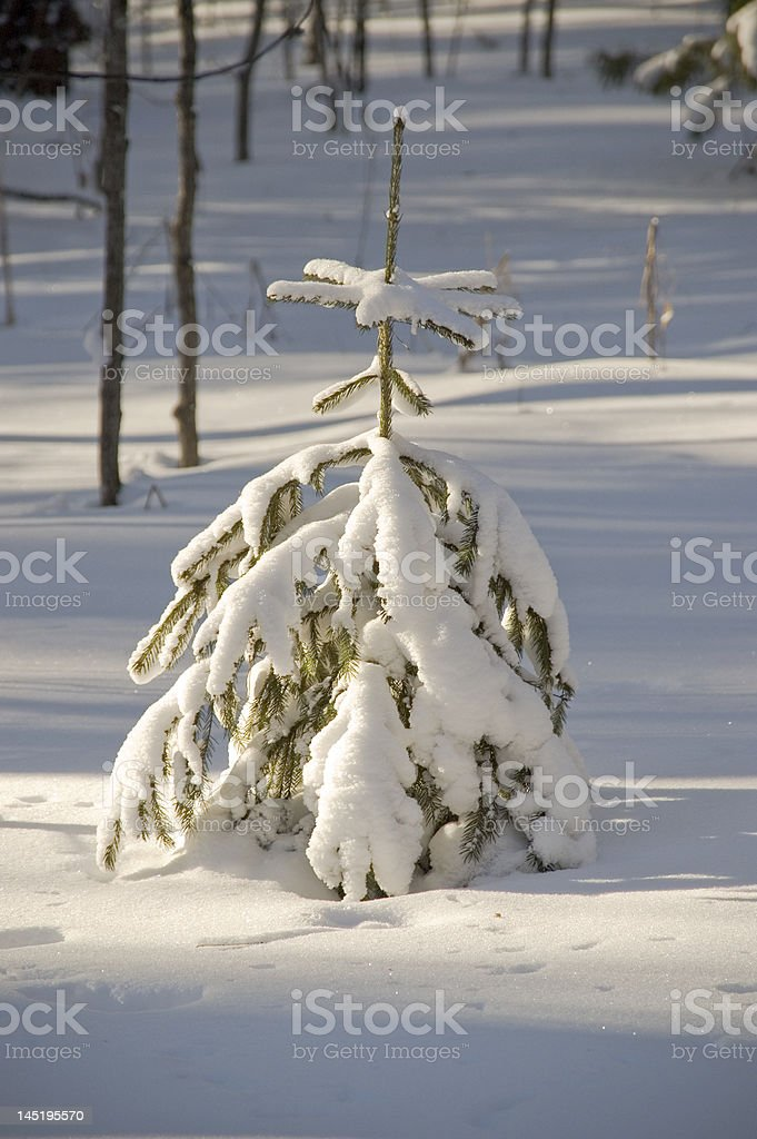 Snow winter trees. royalty-free stock photo