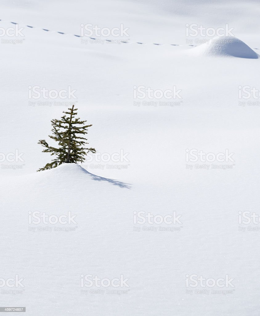 Snow with tree and track of animals stock photo