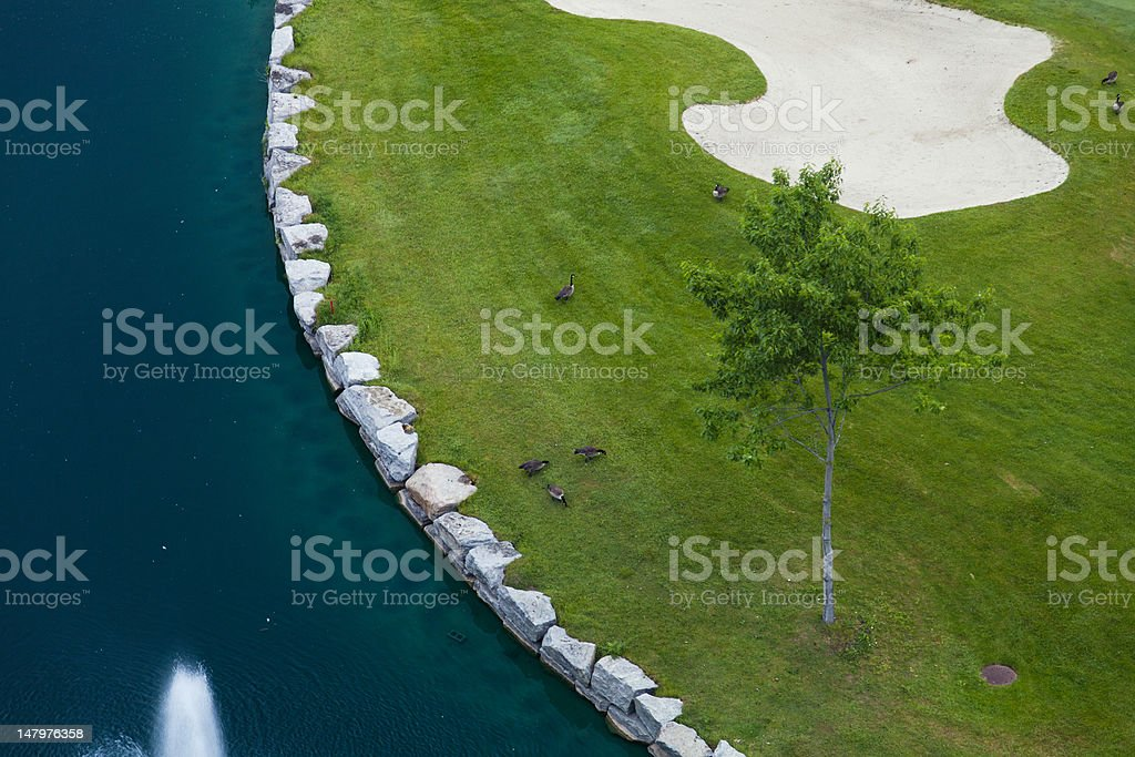 Snowbirds royalty-free stock photo