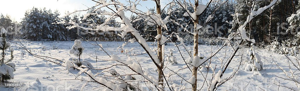 Snowbound branch on sunny day. royalty-free stock photo