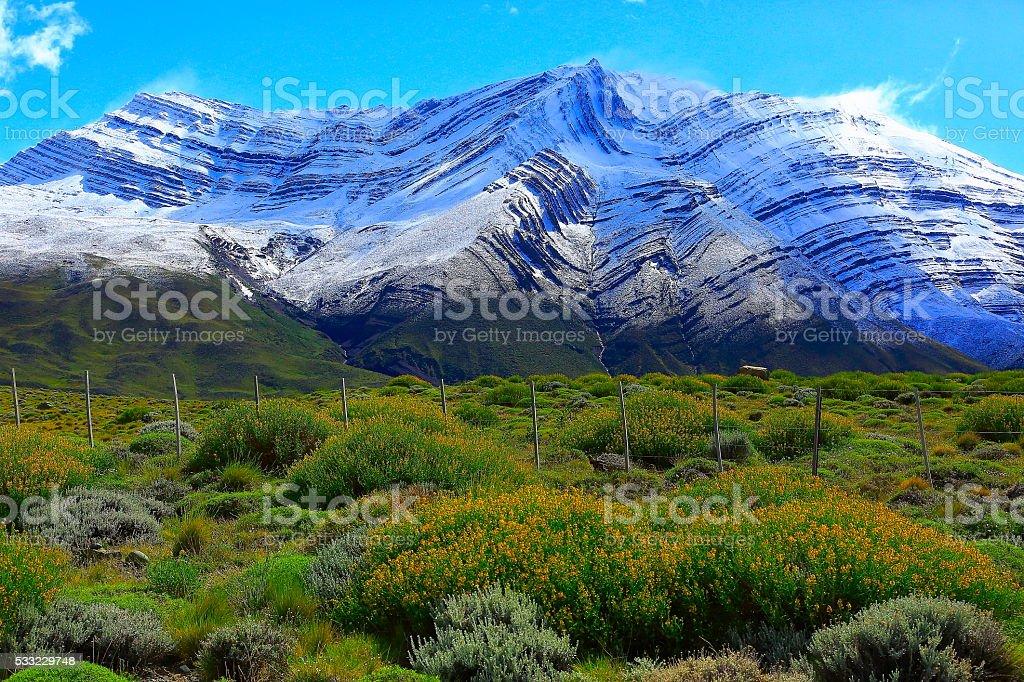 Snowcapped Andes, spring flowerbed pampa,  Chalten, Patagonia, Los Glaciares stock photo