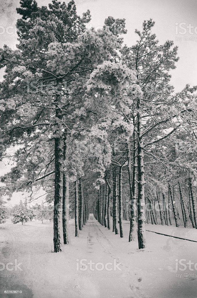 Snow-covered alley, toned photo stock photo