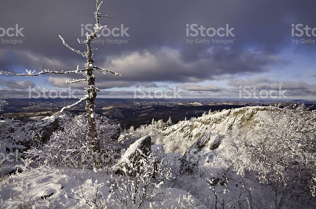 Snow-covered bare tree on the top of mountain royalty-free stock photo