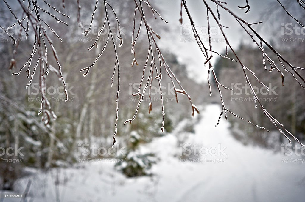 Snow-covered branch royalty-free stock photo