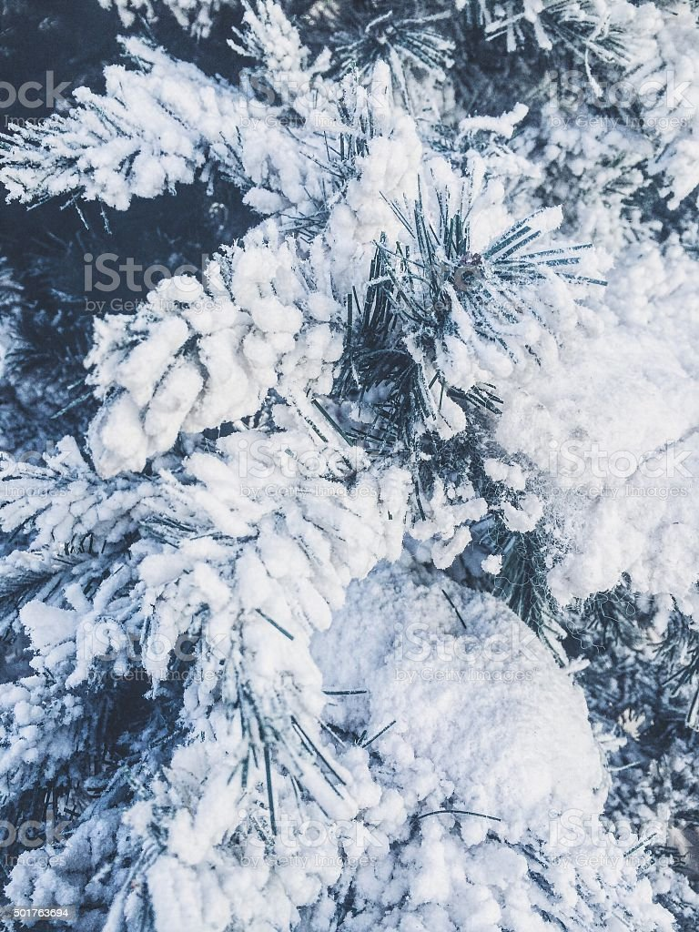 Snow-covered branches of fir tree stock photo