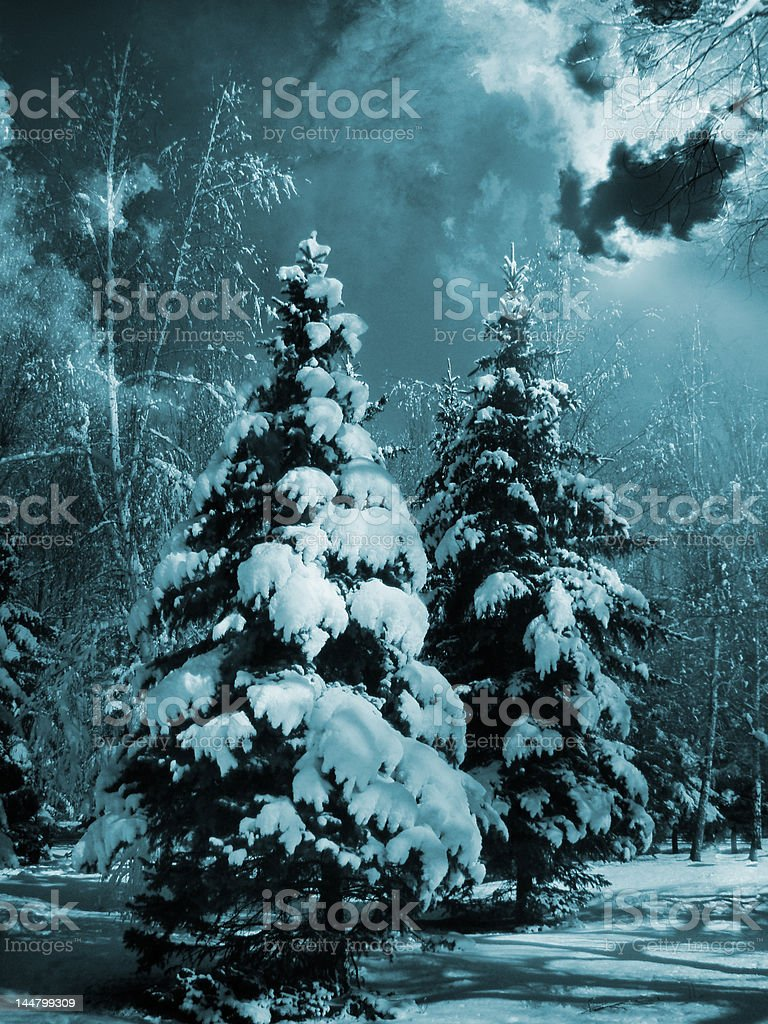 Snow-covered evergreens royalty-free stock photo