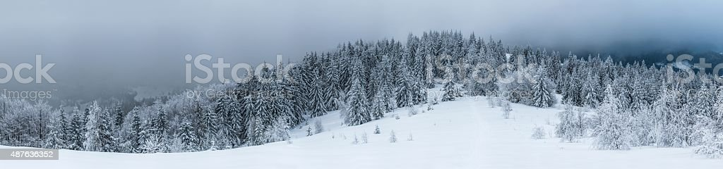 Snow-covered firs on mountain hill stock photo