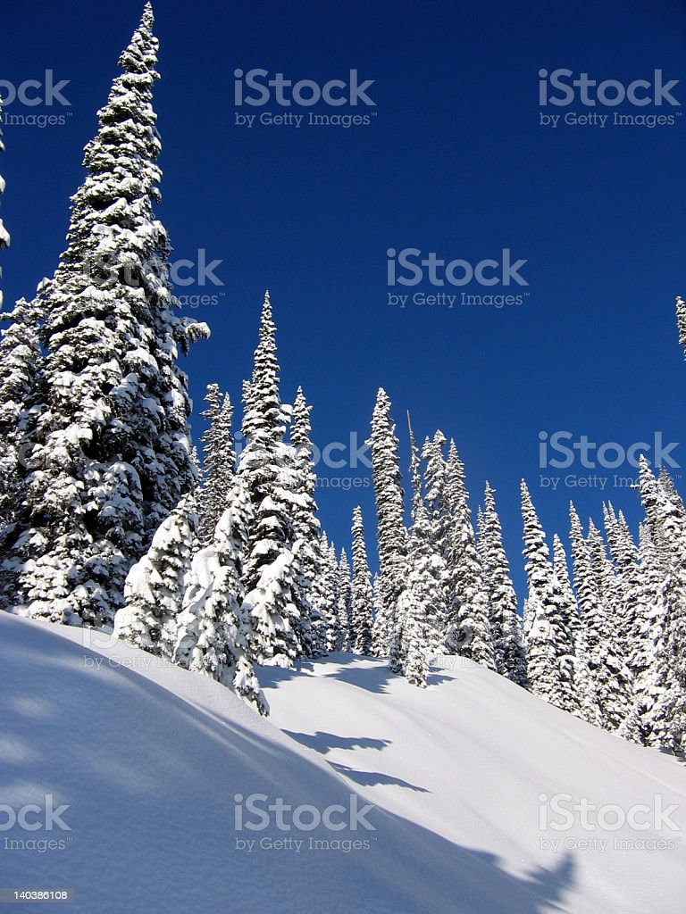 Snow-covered High Alpine Trees royalty-free stock photo