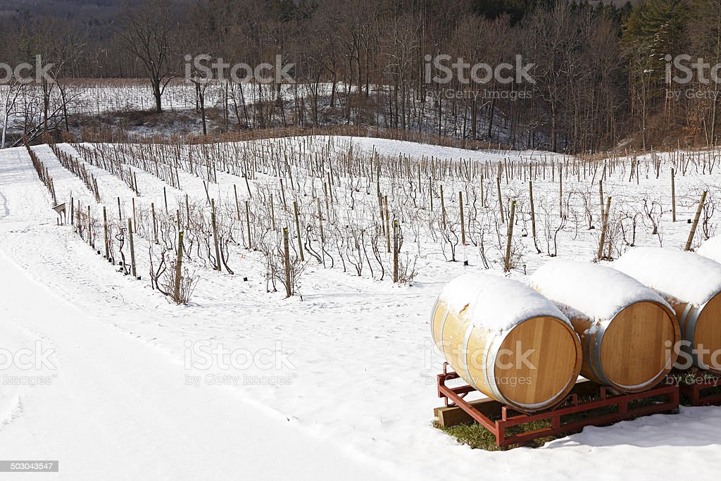 Snow-covered landscape, Ithaca vineyard with oak barrels stock photo