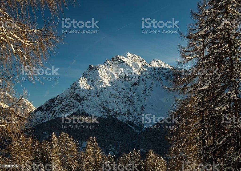 Snow-covered peaks behind trees, swiss Alps, Engadine, Switzerland stock photo