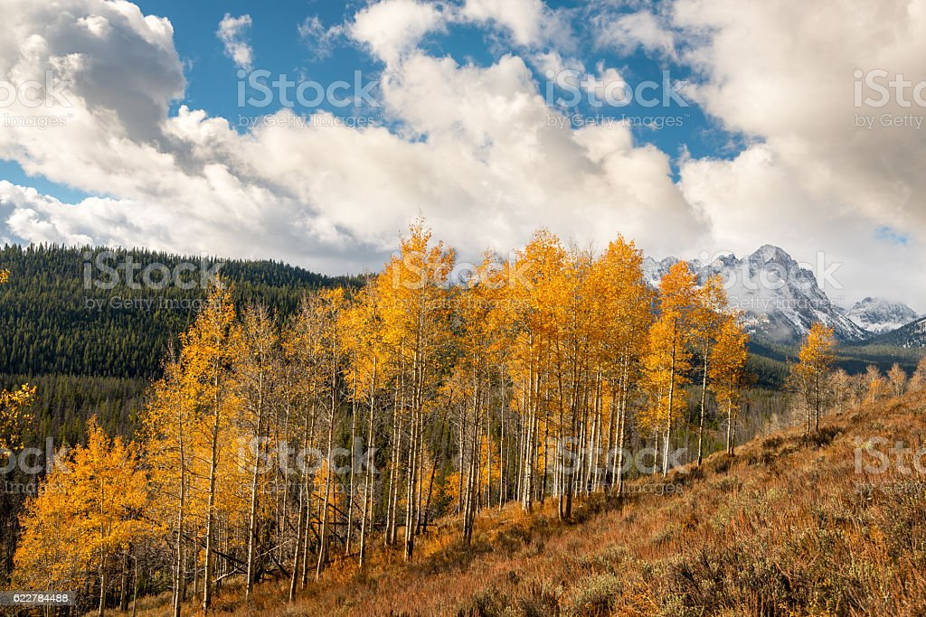 Snowcovered peaks with yellow aspens stock photo