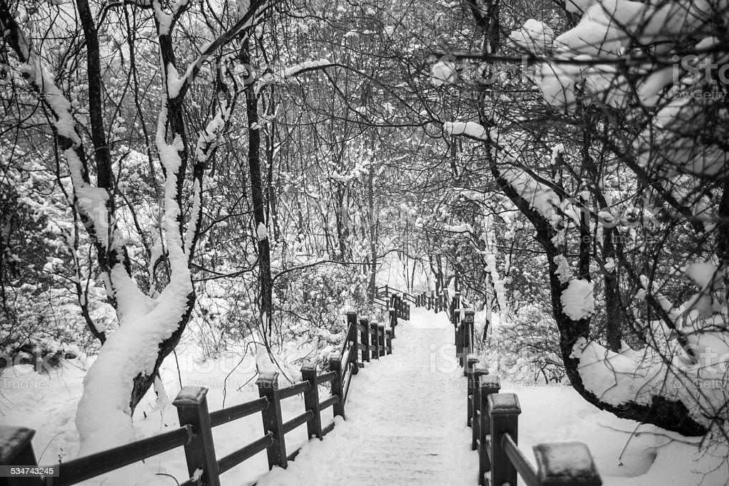 Pokryte śniegiem po schodach zbiór zdjęć royalty-free