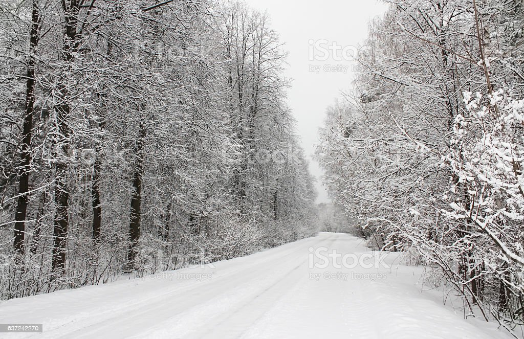Snow-covered trail in a forest stock photo
