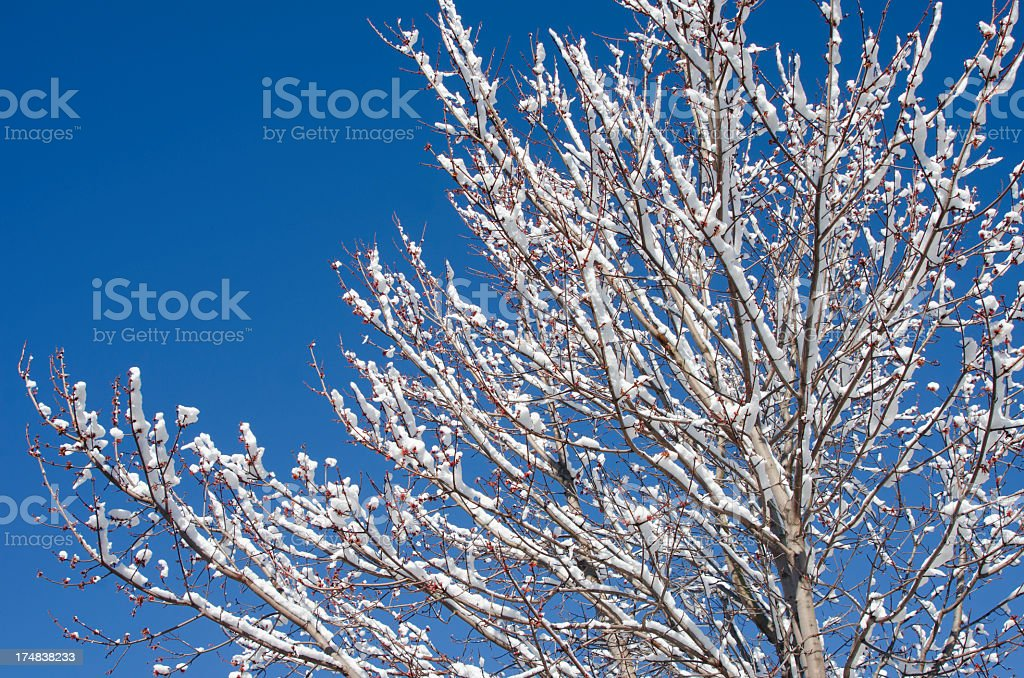 Snow-Covered Tree royalty-free stock photo