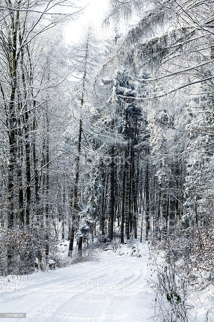 Snow-covered trees and forest road royalty-free stock photo