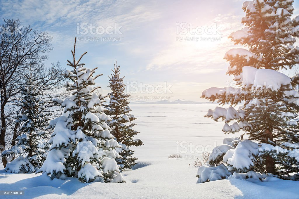 Snow-covered trees near the frozen lake stock photo