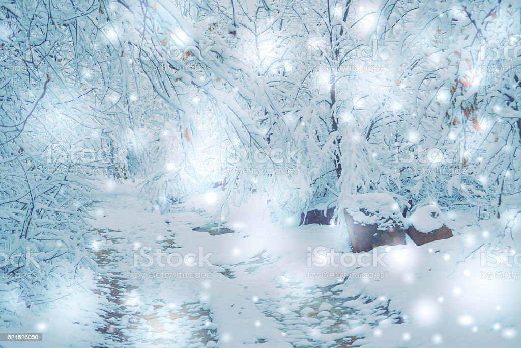 snow-covered trees plants forest in winter stock photo