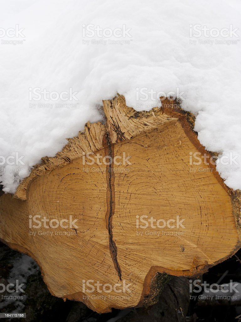 Snowcovered Treetrunk royalty-free stock photo