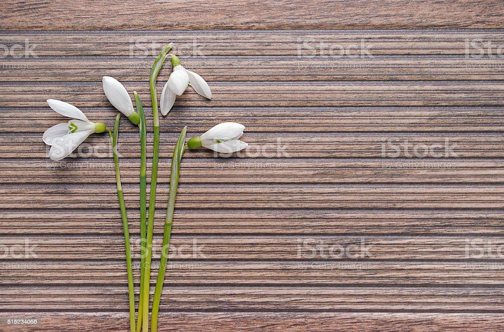 Galanthus auf dem Hintergrund von Holz Textur Lizenzfreies stock-foto