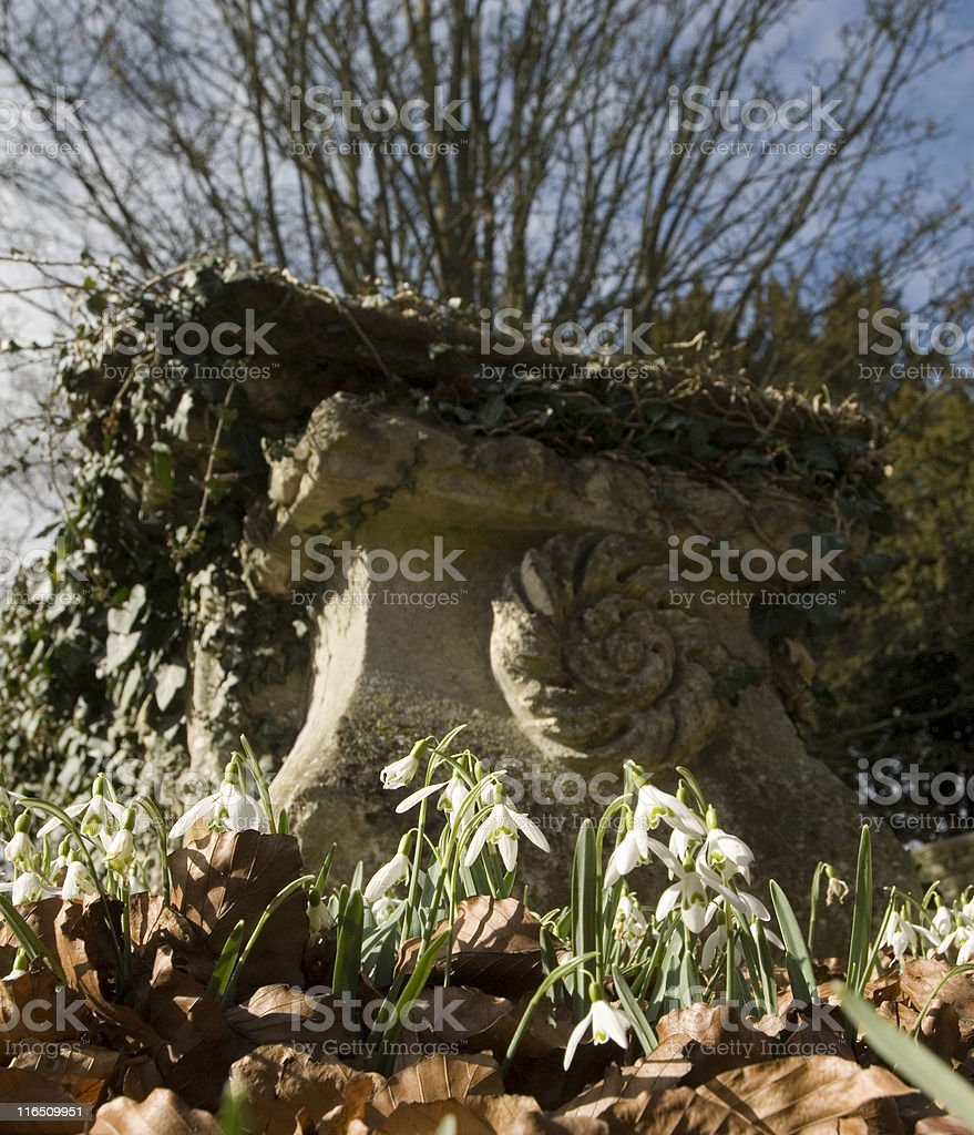 Snowdrops & Grave royalty-free stock photo