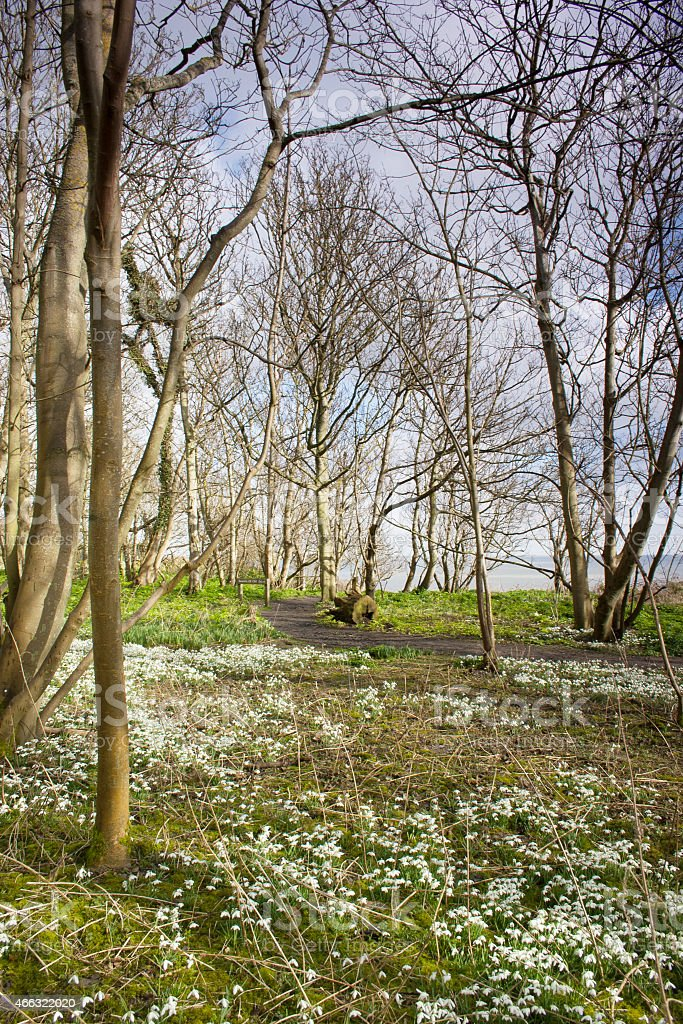 Snowdrops and sea view in Dunwich stock photo