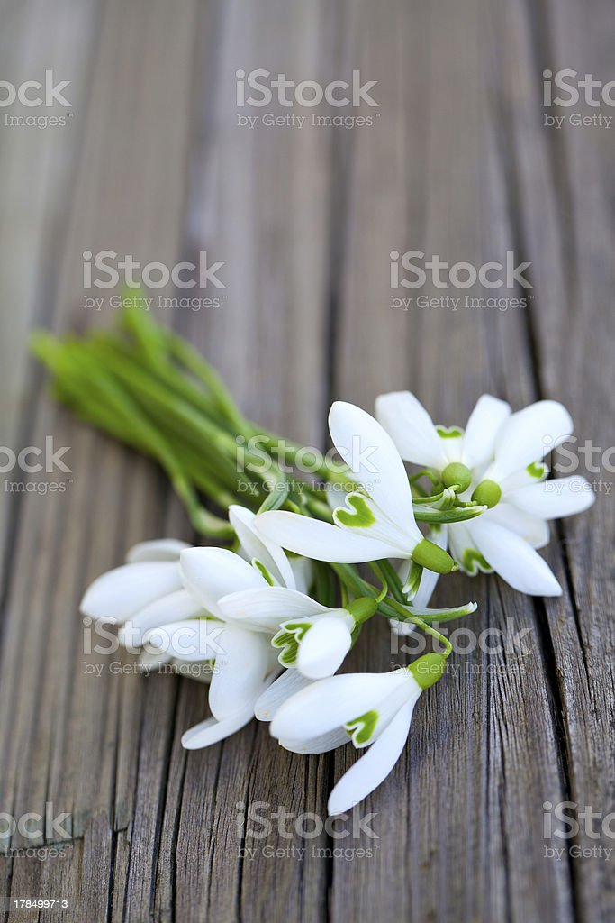 snowdrops on a wooden surface royalty-free stock photo