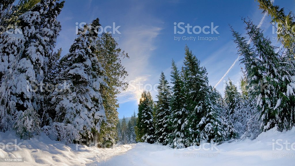 Snowed forest royalty-free stock photo