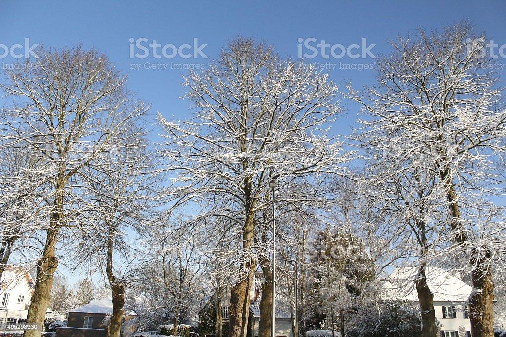Snowed Tress stock photo