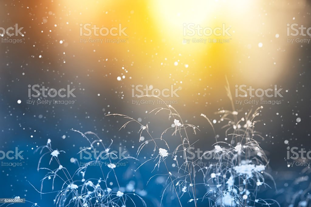 Snowfall and grasses stock photo