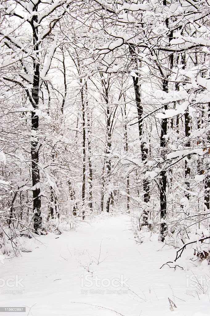 Snowfall in the forest stock photo